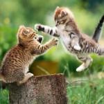 10 мифов о животных